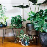 Comment entretenir les plantes d'intérieur tout en évitant le désordre